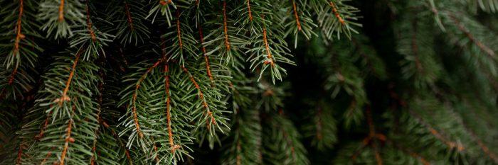 NAEKO reduce en 2019 emisiones de CO² equivalentes a un bosque con 1.000 pinos